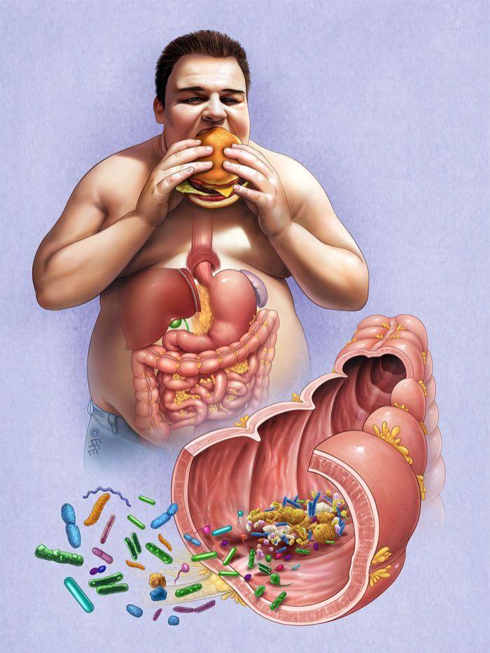 способствуют ли глисты похудению