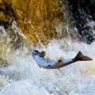 Лососевые рыбы – полезные свойства