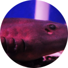 Акулы  – легенды и действительность