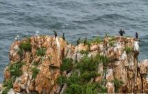 Остров Шкота — остров в архипелаге Императрицы Евгении в заливе Петра-Великого Японского моря