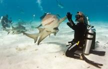 Акула и скат